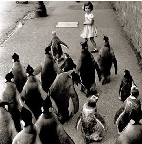 mobs,penguins,vintage