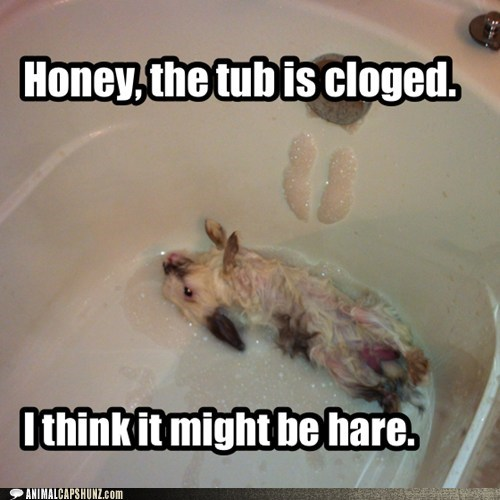 hair bunnies clogged hare puns bathtub - 7113602304
