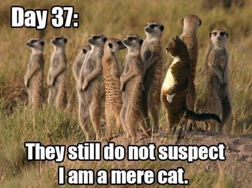 they still don't know Meerkats puns
