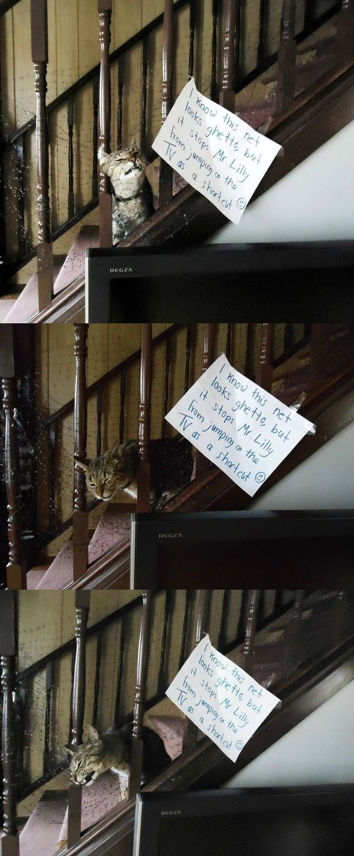 stuck net stairs TV Cats - 7113744640