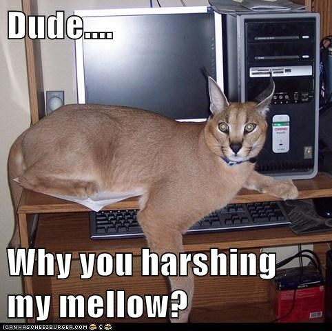 computer mellow lynxes harsh