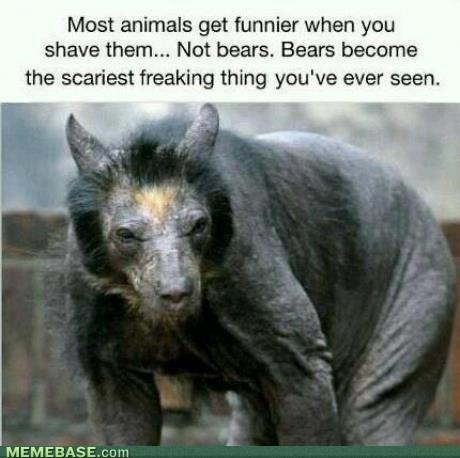 bears shaving nightmare fuel animals - 7114039296