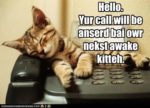 kitten phone sleep Cats - 7114041856