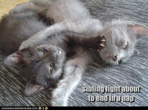 kitten,fight,family,Cats