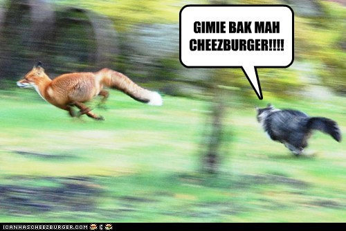 Cheezburger Image 7114126848