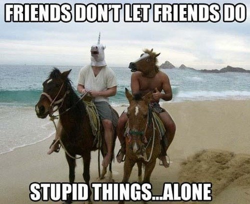 friends,masks,horses,stupid