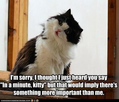 important listen Cats - 7115007744