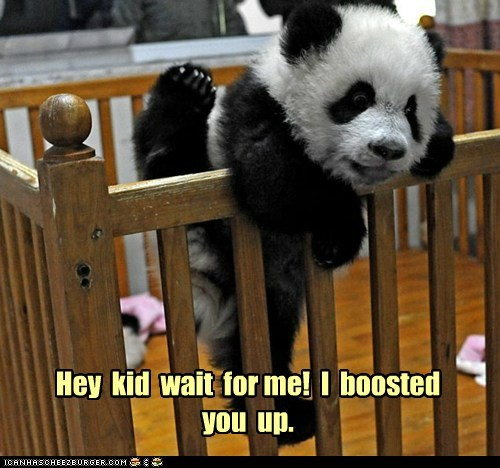 escaping,teamwork,panda,crib