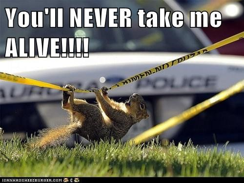 cops escaping police tape squirrels