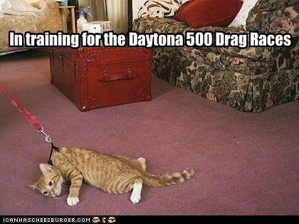 leash no Cats - 7115758336
