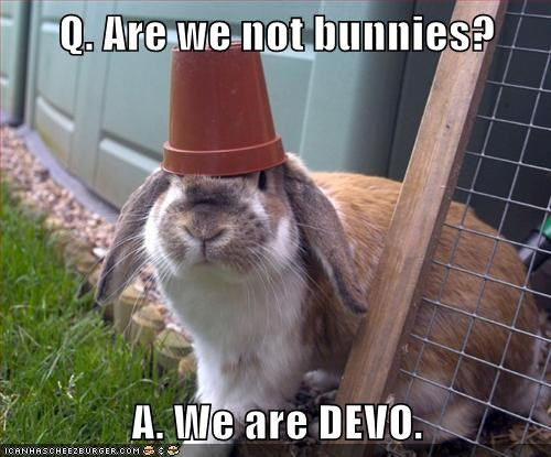 bunnies,Devo,hats,are we not men