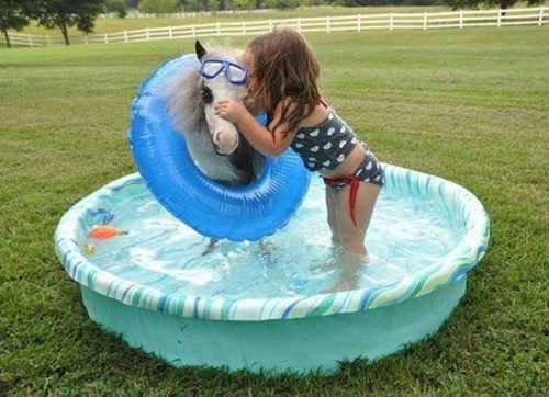 ponies,swimming pools,win