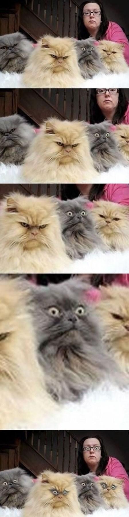 Surprise Cat