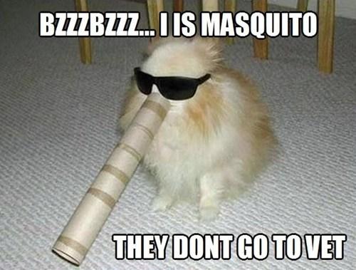 dogs mosquito vet - 7116508928