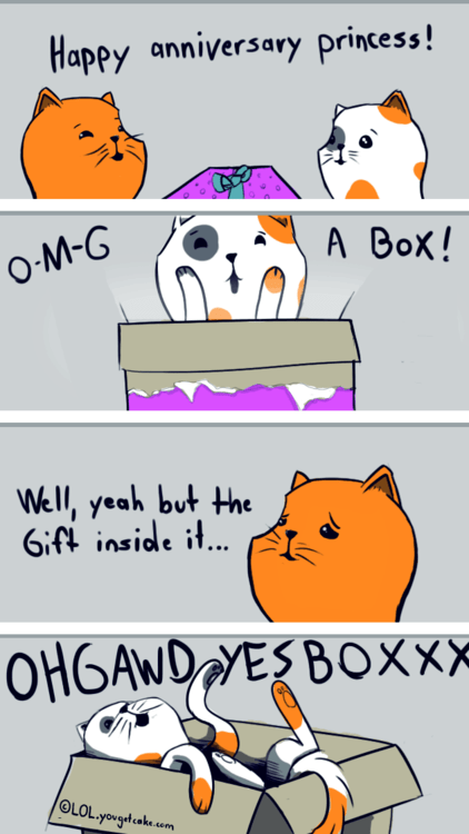 birthday box comic Cats - 7116527104