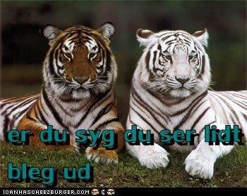 Cheezburger Image 7116527616
