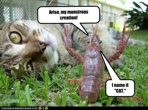 "Arise, my monstrous creation! I name it ""CAT."""