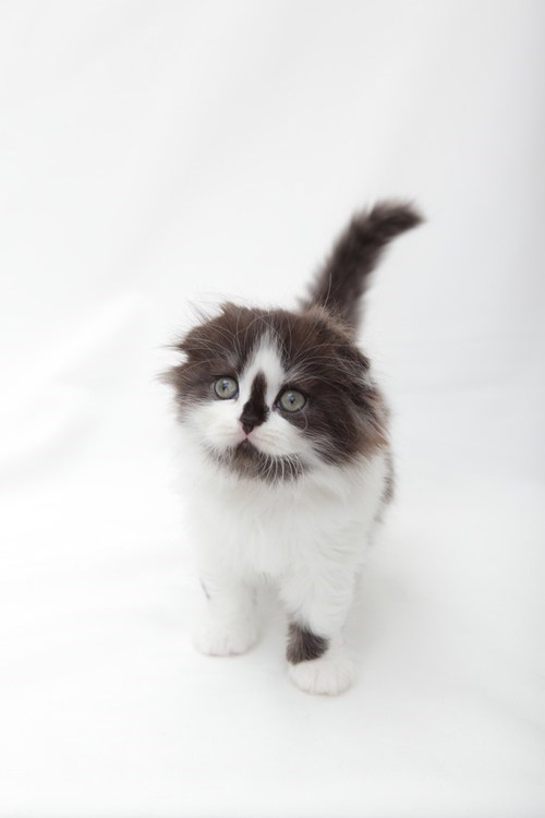 cyoot kitteh of teh day Cats - 7116851456