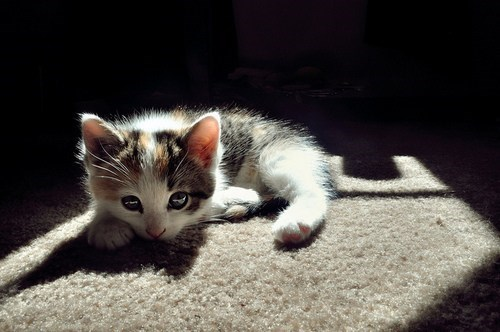 Cyoot Kitteh of teh Day: Dramatic Lighting