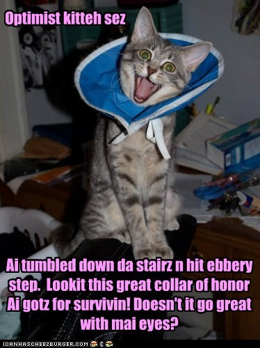 Optimist kitteh sez Ai tumbled down da stairz n hit ebbery step. Lookit this great collar of honor Ai gotz for survivin! Doesn't it go great with mai eyes?