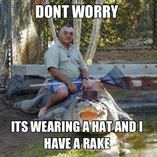alligator,wtf,safety first,weird