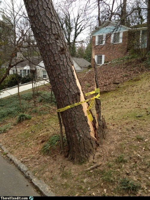 trees,falling trees,caution tape,g rated,there I fixed it