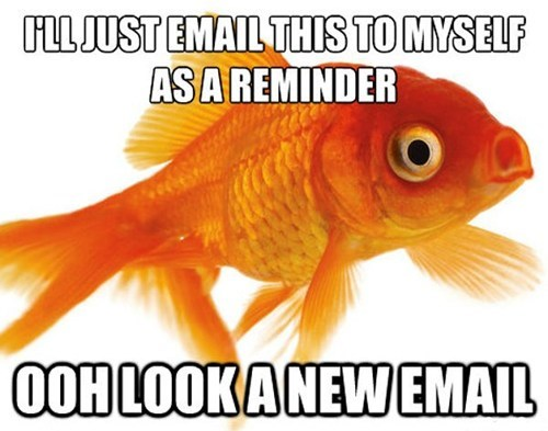memory goldfish email - 7116958464
