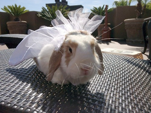 bride dress bunny veil - 7117191680