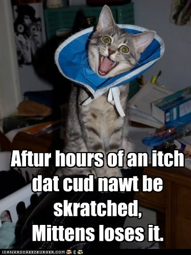 Aftur hours of an itch dat cud nawt be skratched, Mittens loses it.