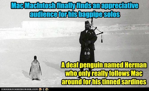 snow,penguins,bagpipes