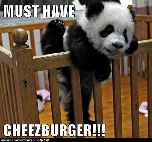 Cheezburger Image 7117730560