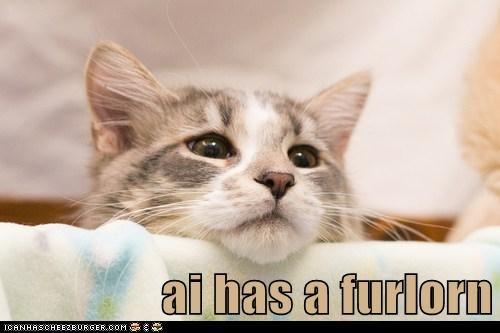 kitten sads Cats - 7117908736