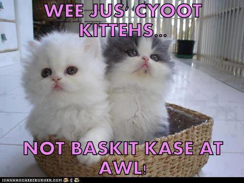 WEE JUS' CYOOT KITTEHS...  NOT BASKIT KASE AT AWL!