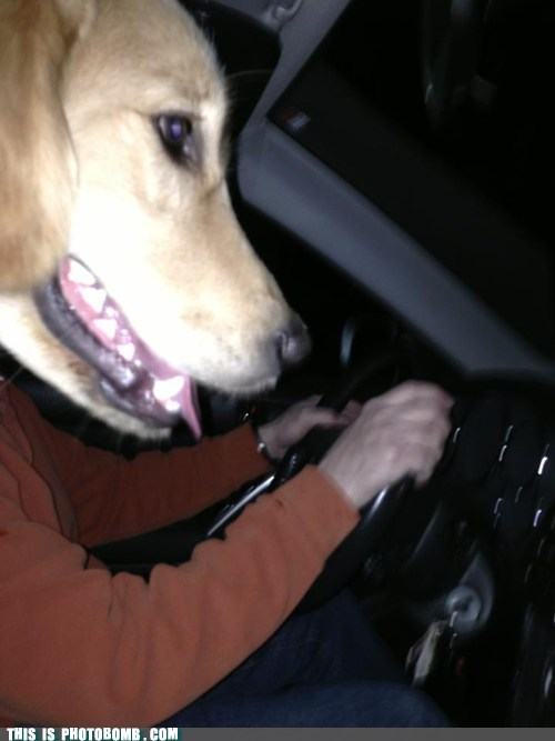 driving dogs license - 7118754816
