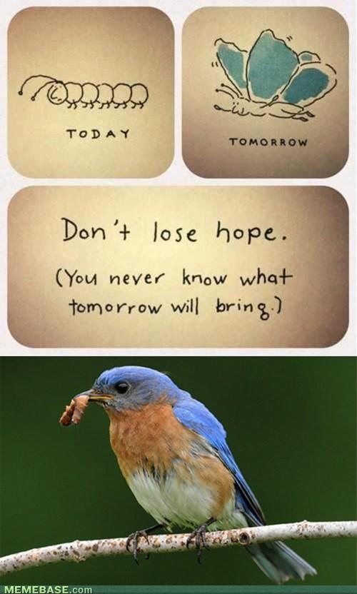 nature hope metamorphosis - 7118814208