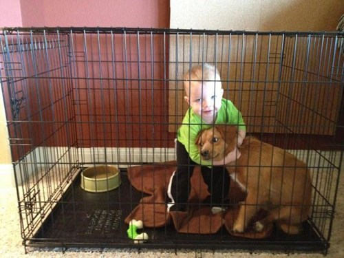 dogs,cage fight,cage match,pets
