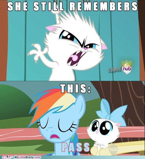 may the best pet win,Cats,rainbow dash