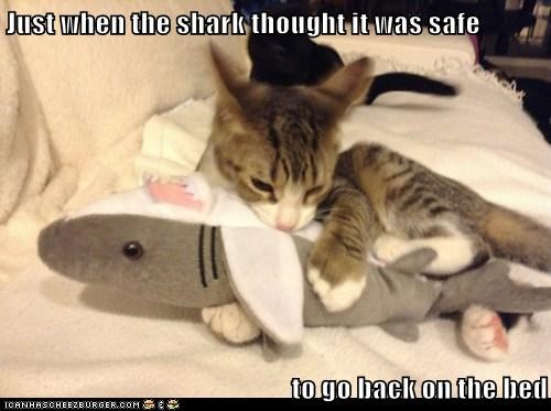 bed,toys,sharks,Cats