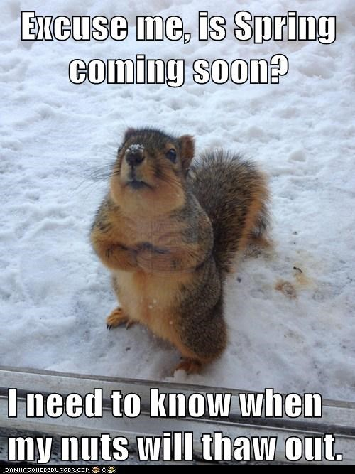 spring cold squirrels nuts frozen - 7119235840