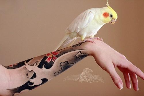 birds cockatiels squee spree squee - 7119667200