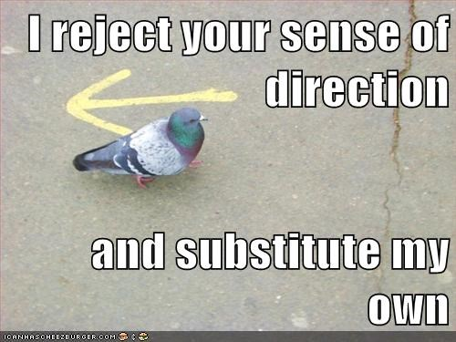 arrow,direction,I reject your reality,rebel,pigeons