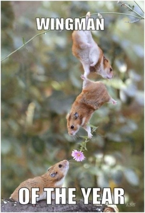 holding on hanging hamsters flowers wingman - 7119778048