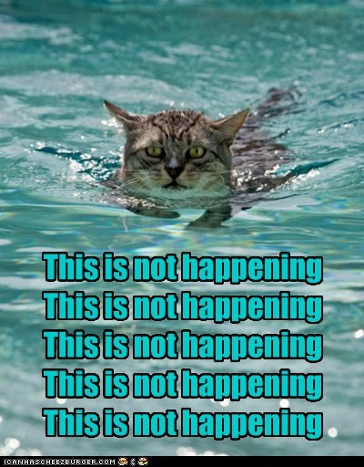 water nope Cats