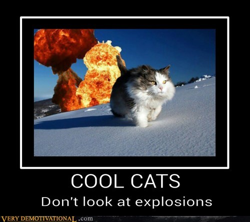 cool,explosions,Cats