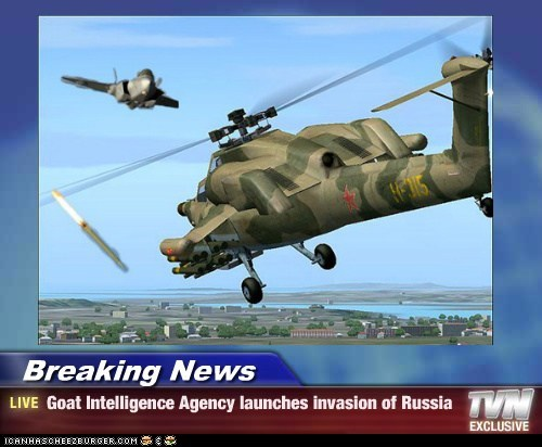 Breaking News - Goat Intelligence Agency launches invasion of Russia