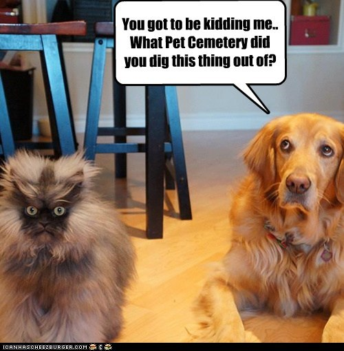 dogs colonel meow golden retriever Cats - 7120410880