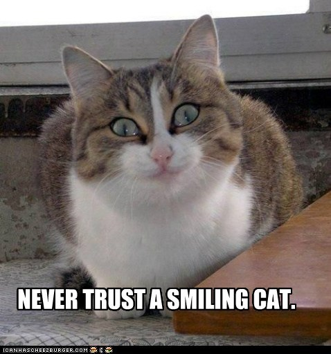 smiling,trust,Cats