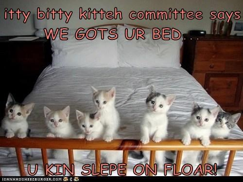 itty bitty kitteh committee says WE GOTS UR BED...  U KIN SLEPE ON FLOAR!