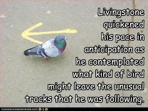 Livingstone quickened his pace in anticipation as he contemplated what kind of bird might leave the unusual tracks that he was following.