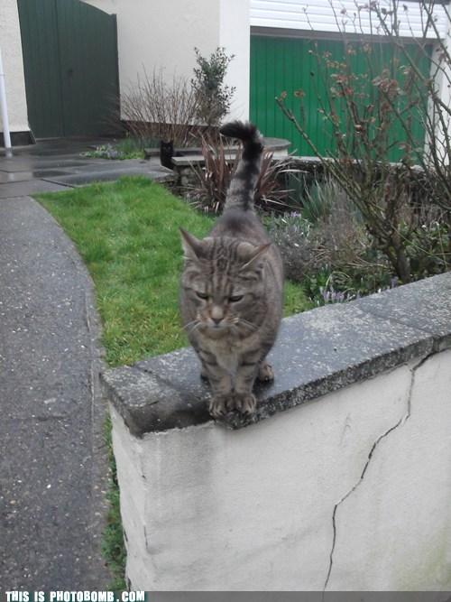 SOON Cats animals - 7121323520